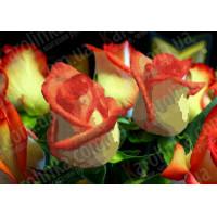 Каролинка КБЦ 3005 Роза