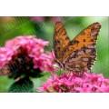 Каролинка КБЦ 5002 Бабочка на цветке