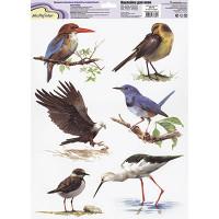 """Mr. Painter ОК-10 Наклейки для окон """"В мире птиц 2"""""""