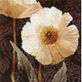 Алиса 2-16                  Белые цветы. Открытый свету