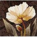 Алиса 2-17 Белые цветы. Залитый светом