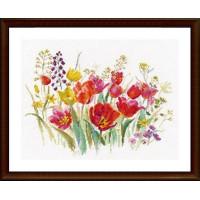 Алиса 2-34 Полевые тюльпаны