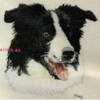 Anchor CC76258 Border Collie (Бордер-Колли)