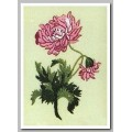 Anchor PE122 Oriental Chrysanthemum (Восточная хризантема)