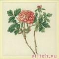 Anchor RHS07 Paeonia suffruticosa (red) (Цветок)