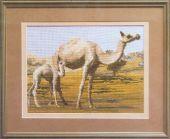 Чаривна Мить 552 Верблюды