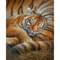 Dimensions 65105 Cozy Cub (Спящий тигрёнок)