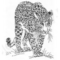 Искусница 632 Графика. Леопард.