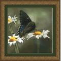 Kustom Krafts 73097 Бабочка-парусник (Swallowtail Butterfly)