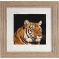 Luca-S B334 Тигр