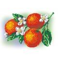 МП Студия КН-434 Апельсины