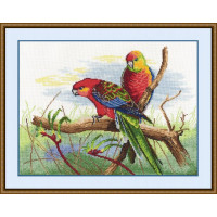 Овен 509 Попугаи