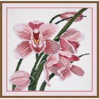 Овен 762 Зов орхидеи
