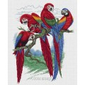 Pinn 24-P                      Попугаи