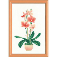 Риолис 1161 Желтая орхидея