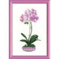 Риолис 1163 Сиреневая орхидея