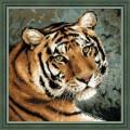 Риолис 1282 Амурский тигр
