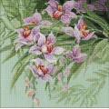 Риолис 1401 Тропическиеорхидеи