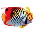 RTO R237 Океанская рыбка 3