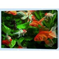 Allegro 4346 Картина по номерам 40*50 в раме Золотые рыбки Е425 (24 цвета, 3 звезды)