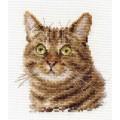 Алиса 0-135 Европейский кот