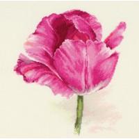 Алиса 2-43 Тюльпаны. Малиновое сияние