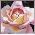 Чаривна Мить РК-033 Розовая роза
