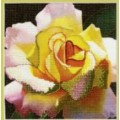 Чаривна Мить РК-037 Жёлтая роза