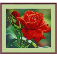 Galla Collection Л 312 Красная роза