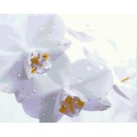 Hobruk  Х0212238 HS0361 Набор для рисования по номерам 'Орхидeя' 40*50см