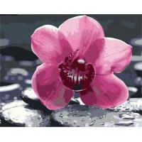Hobruk  Х0212239 HS0364 Набор для рисования по номерам 'Розовая орхидея' 40*50см