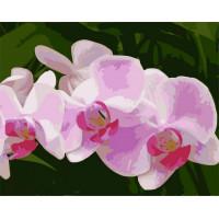 Hobruk  Х0212240 HS0365 Набор для рисования по номерам 'Ветка орхидеи' 40*50см