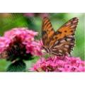 Каролинка КБЦ 4002 Бабочка на цветке