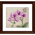 Luca-S B2227 Орхидея