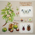 Марья Искусница 03.015.15 Ботаника: Каштан