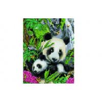 Paintboy QS200855 Алмазная мозаика 30х40 QS200855 Две панды