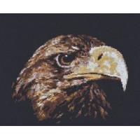 Палитра 02.003 Взгляд орла