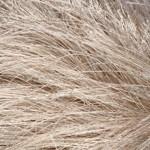Пряжа для вязания YarnArt Jungle (Ярнарт Джангл) Цвет 19 бежевый