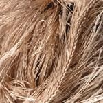 Пряжа для вязания YarnArt Samba Цвет 3276 т.бежевый